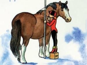 foto pony meten